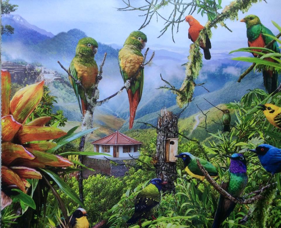 Birding Peru. ABC illustration of birds of Peruvian Andes