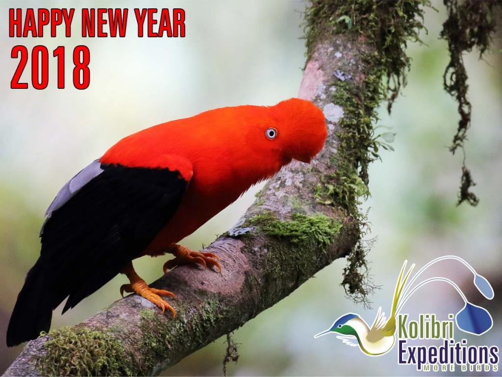 Happy New Year. Andean Cock of the Rock. Photo: Carlos Altamirano