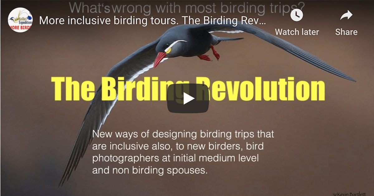 The perfect birding tour for someone who has never been on a birding tour before.